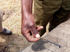 A ranger displaying an arrow head removed from the dead elephant body