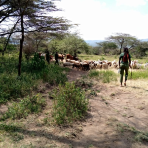 Women rangers on patrol to stop illegal grazing