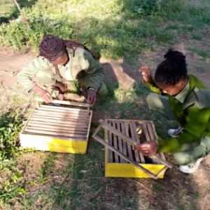 Women building beehives