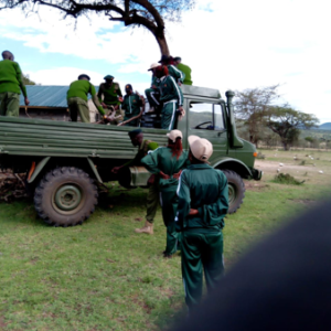 Conservancy rangers recovered firewood ready for charcoal burning
