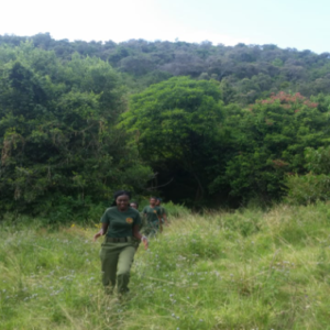 Women rangers on a walk with clients